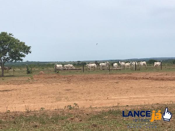 Área de terras c/ 4.235,00 has,(Fazenda Conquista do Laranjal) - Região Planalto da Serra/MT